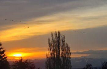 Sunrise (April 1, 2021). Photo courtesy of Jackie Rodriguez of Ferndale.